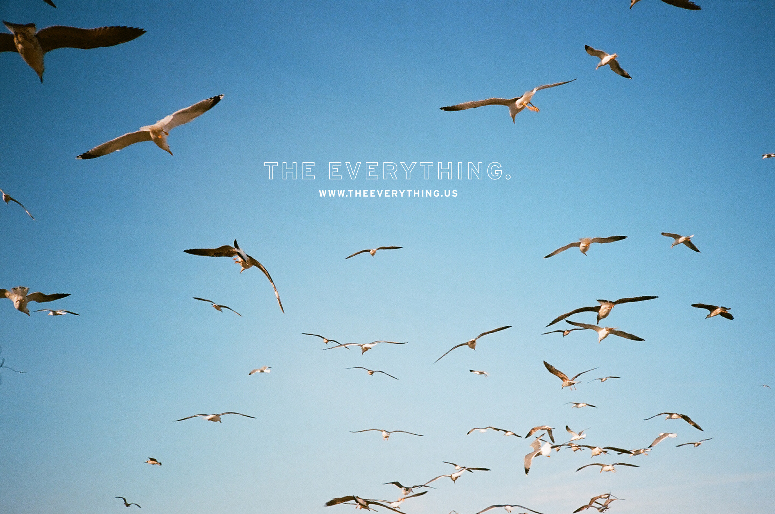 THE EVERYTHING.
